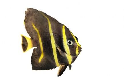fish for sale nemo 39 s world