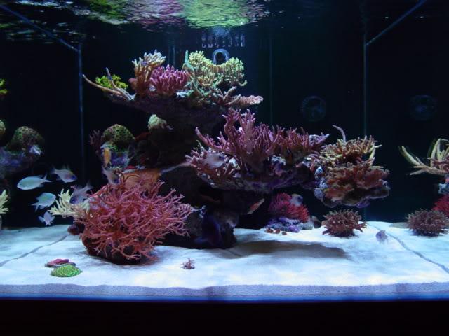 Live Plants For Sale Nemo S World