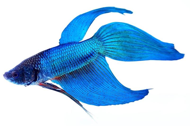fish for sale nemo 39 s world. Black Bedroom Furniture Sets. Home Design Ideas