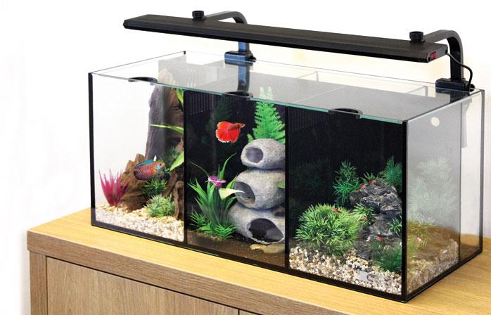 Aquaone Betta Trio Aquarium Nemo 39 S World